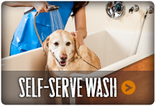 Self Serve Wash